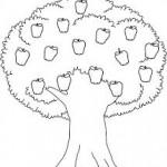 1. sınıf elma şablonu