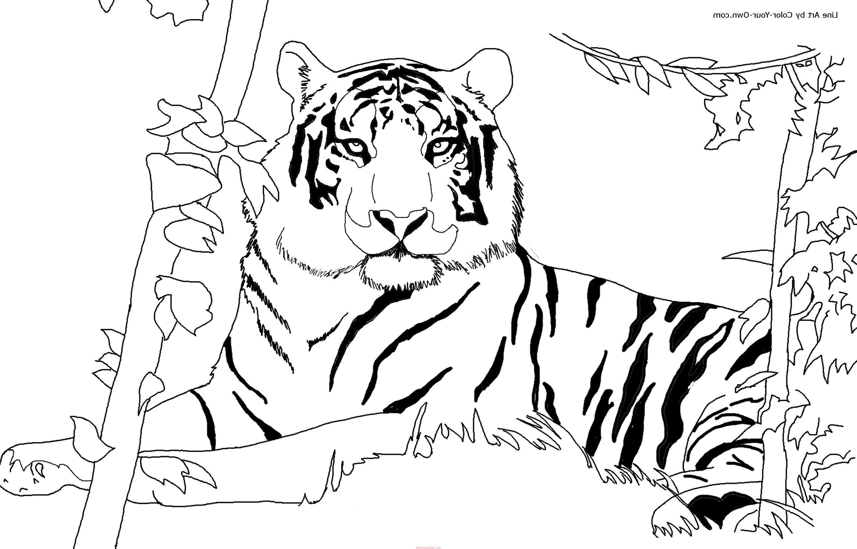 Тигр амурский раскраска