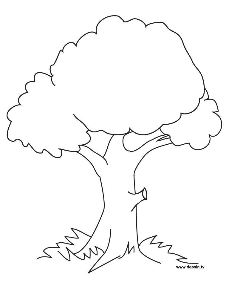 A a ablonlar s n f retmenleri in cretsiz zg n for Foto di alberi da colorare