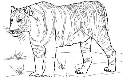 Tiger Boyama Oyunu Sinif Ogretmenleri Icin Ucretsiz Ozgun
