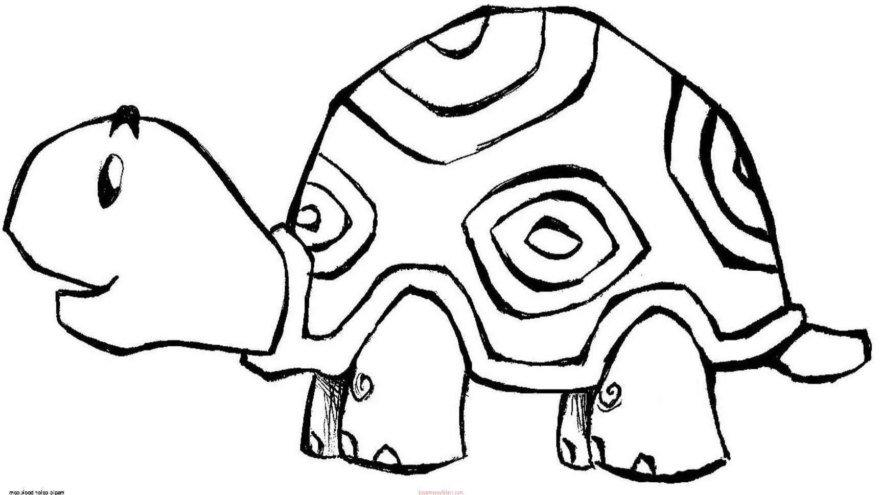 Kaplumbaga Boyama Sayfalari Sinif Ogretmenleri Icin Ucretsiz