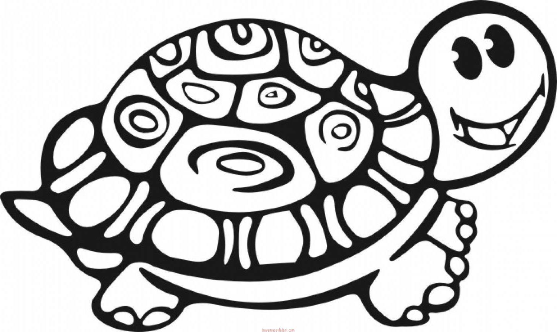 Kaplumbaga Boyama Sayfalari 14 Sinif Ogretmenleri Icin