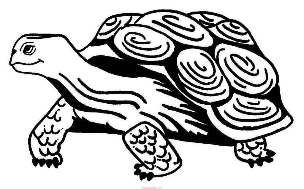 Kaplumbaga Boyama Sayfalari 16