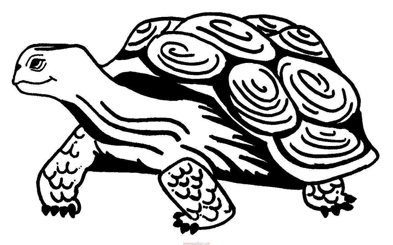 Kaplumbaga Boyama Sayfalari 16 Sinif Ogretmenleri Icin