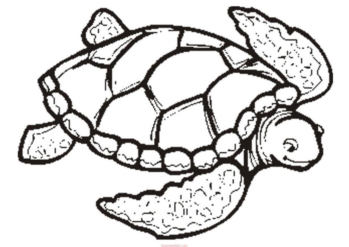 Kaplumbağa Boyama Sayfaları 4 Sınıf öğretmenleri Için ücretsiz
