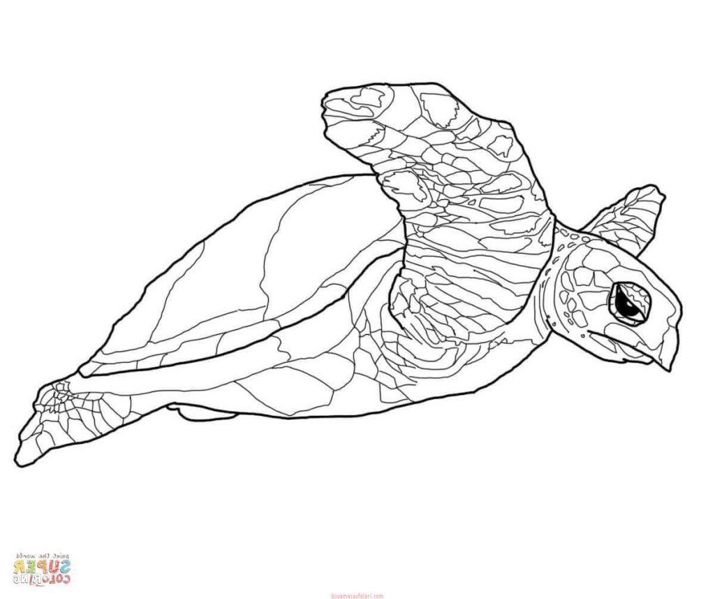 Kaplumbaga Boyama Sayfalari 7