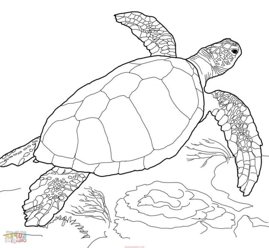 Kaplumbaga Boyama Sayfalari 8