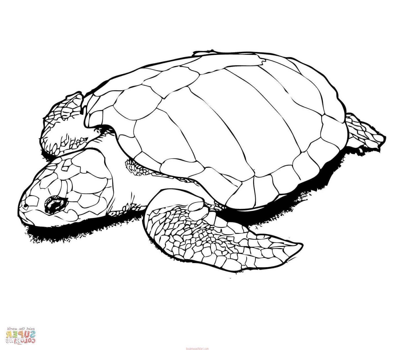 Kaplumbaga Boyama Sayfalari 9 Sinif Ogretmenleri Icin Ucretsiz