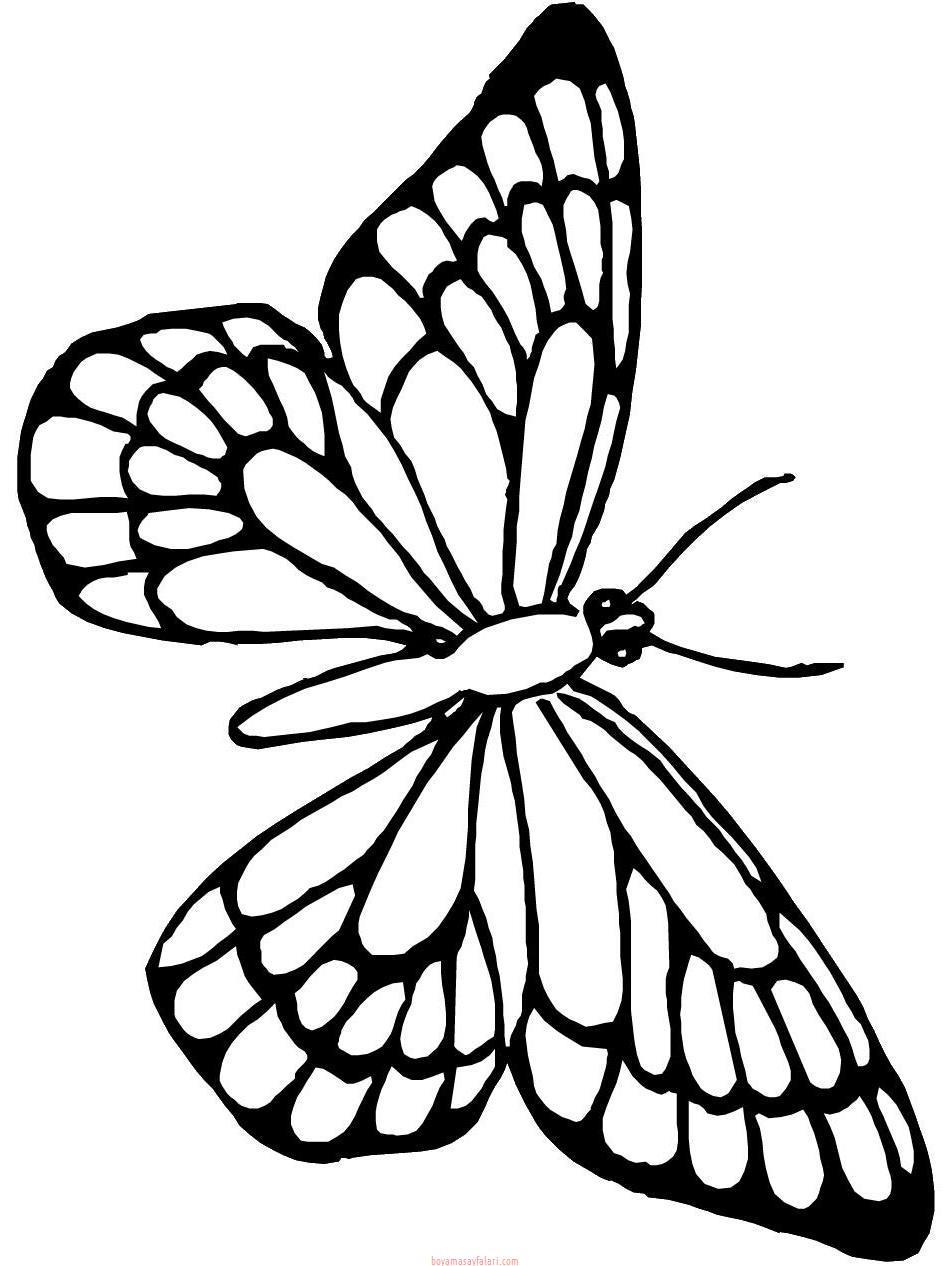 Kelebek şablonları 11 Sınıf öğretmenleri Için ücretsiz