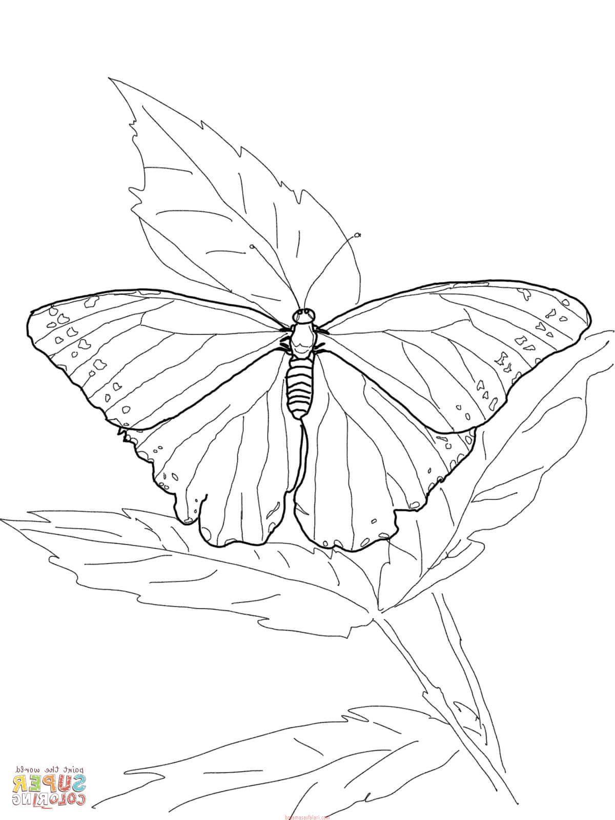 Kelebek Sablonlari 4 Sinif Ogretmenleri Icin Ucretsiz Ozgun