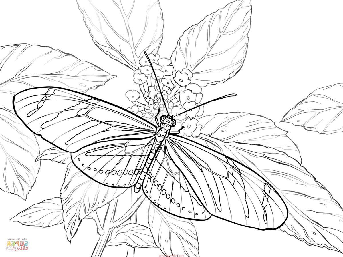 Kelebek Sablonlari 9 Sinif Ogretmenleri Icin Ucretsiz Ozgun