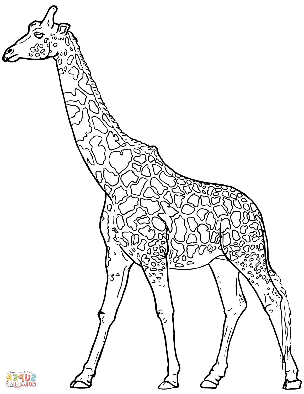 Zürafa Boyama 1 Sınıf öğretmenleri Için ücretsiz özgün Etkinlikler