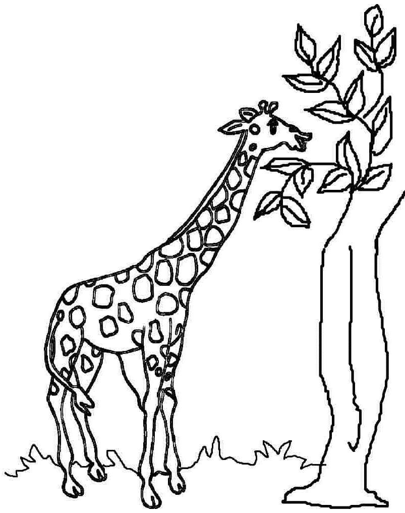 Zürafa Boyama 7 Sınıf öğretmenleri Için ücretsiz özgün Etkinlikler