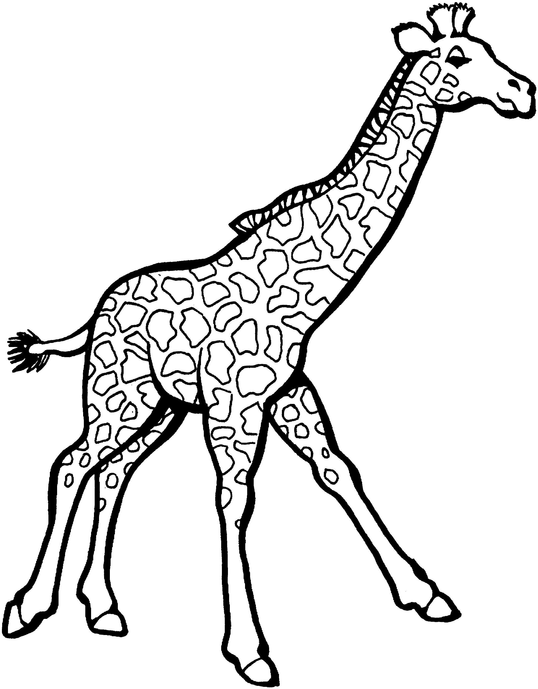 Zürafa Boyama 8 Sınıf öğretmenleri Için ücretsiz özgün Etkinlikler