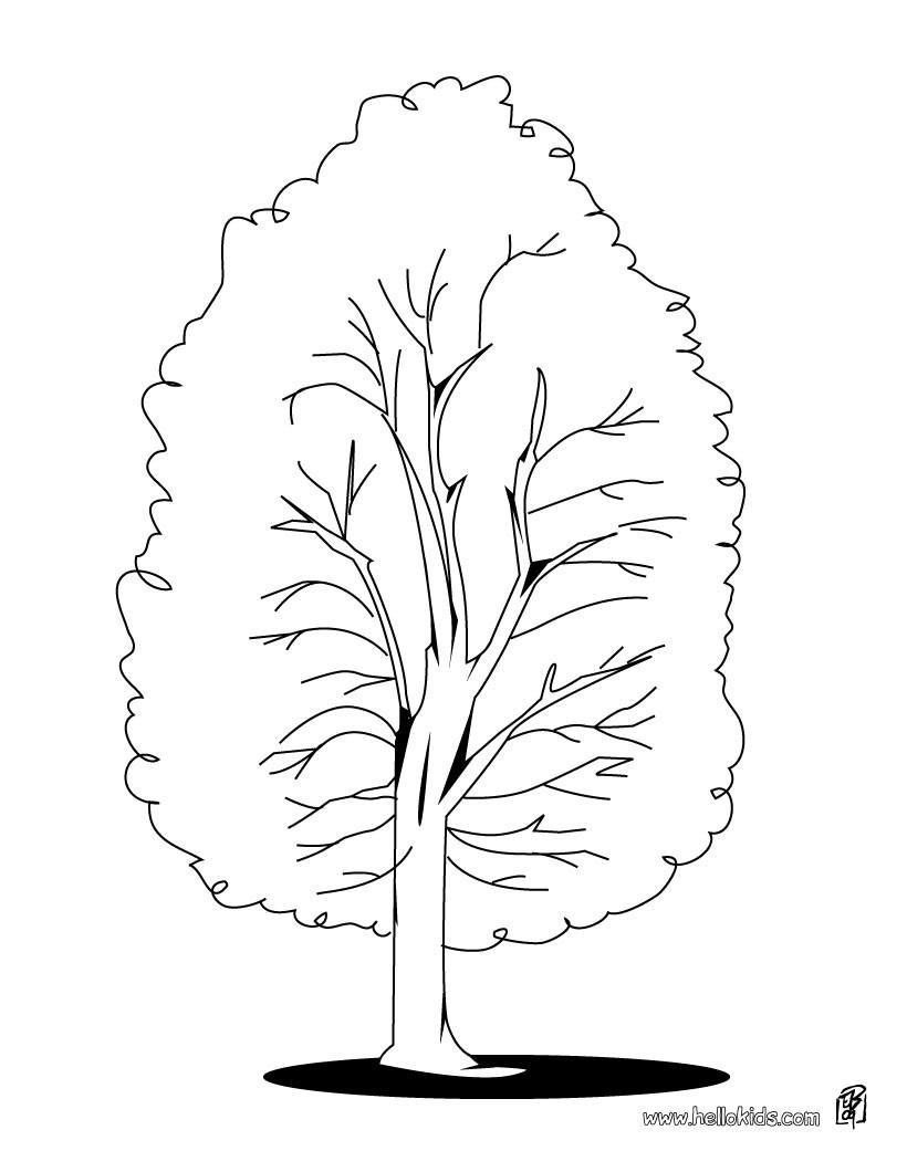 Ağaç şablonları Sınıf öğretmenleri Için ücretsiz özgün