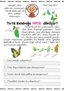 thumbnail of kelebek
