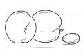 Kayısı Boyama Sayfaları